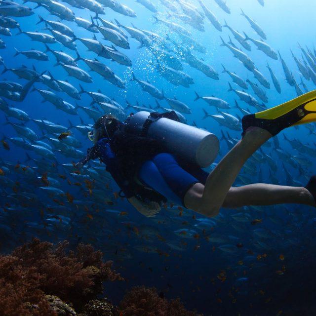 Scuba diving…